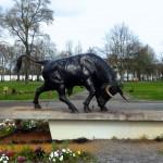 dax-taureau